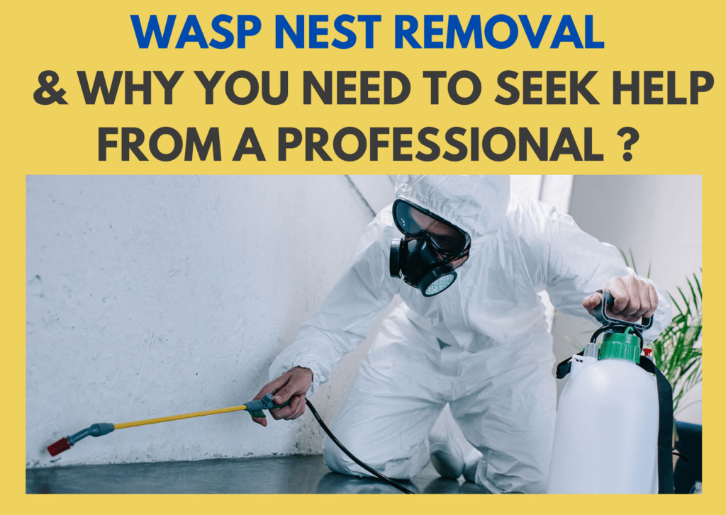 Wasp Nest Removal and Why You Need to Seek Help From a Professional