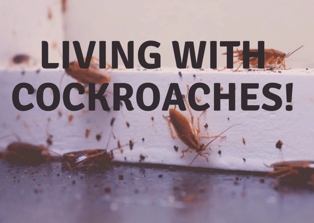 Living with Cockroaches!