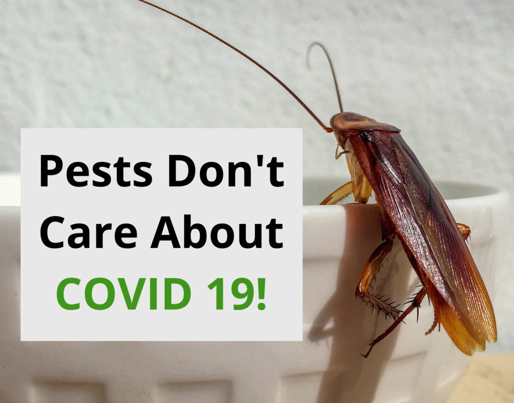 Pests Don't Care About COVID 19!