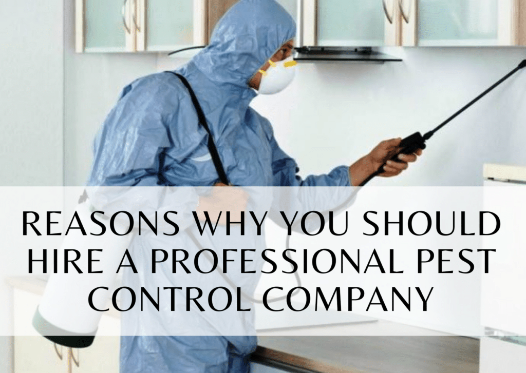 Reasons Why You Should Hire a Professional Pest Control Company