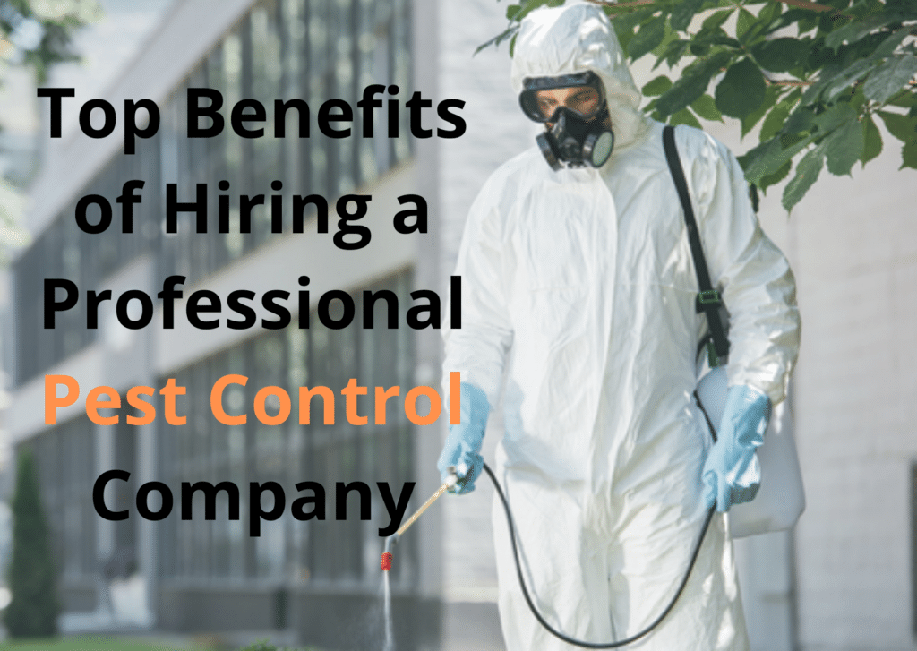Top Benefits of Hiring a Professional Pest Control Company