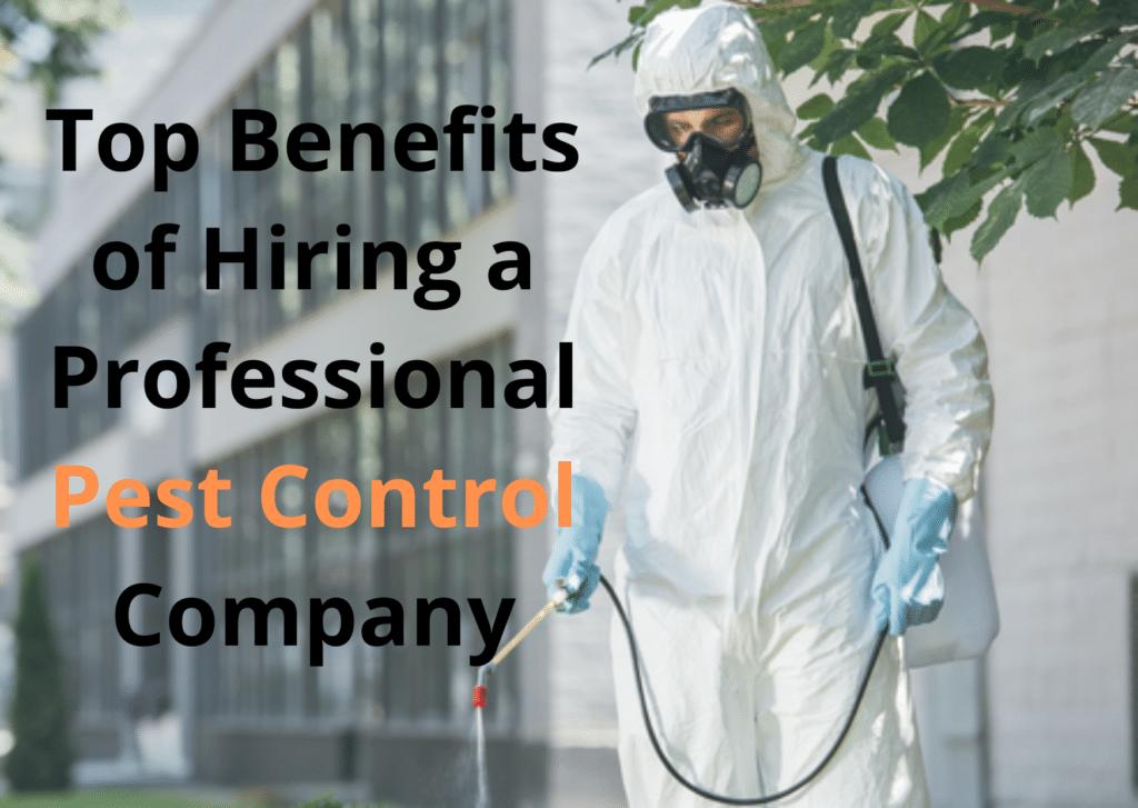 Top Benefits of Hiring a Professional Pest Control Company