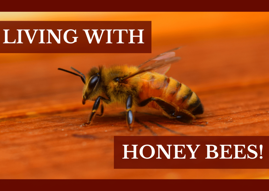 Living With Honey Bees!