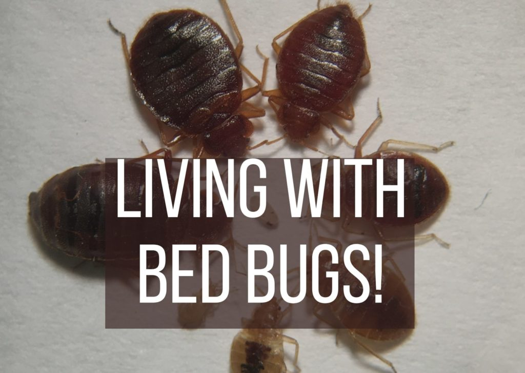 Living with Bed Bugs
