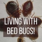 Edgeley Bed Bugs removal
