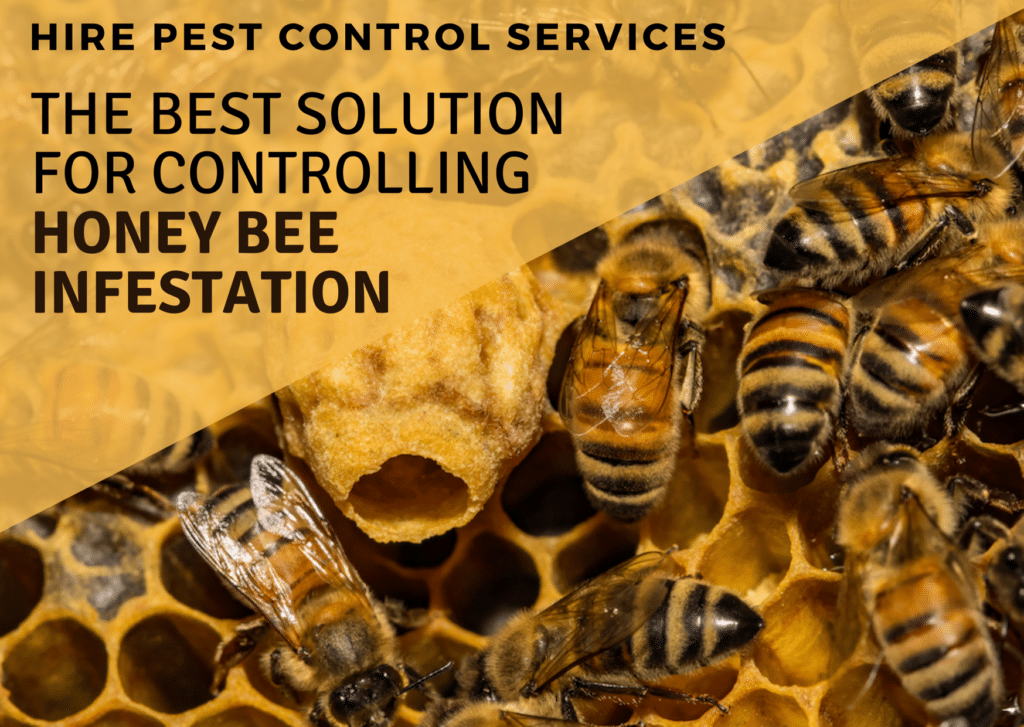 Hire Pest Control Services _ The best Solution for Controlling Honey Bee Infestation