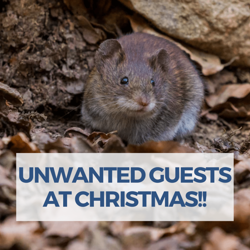 Unwanted Guests at Christmas
